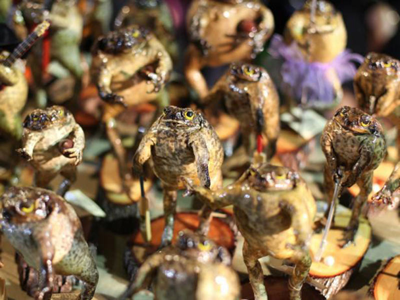 Stuffed Cane Toad as a souvenir