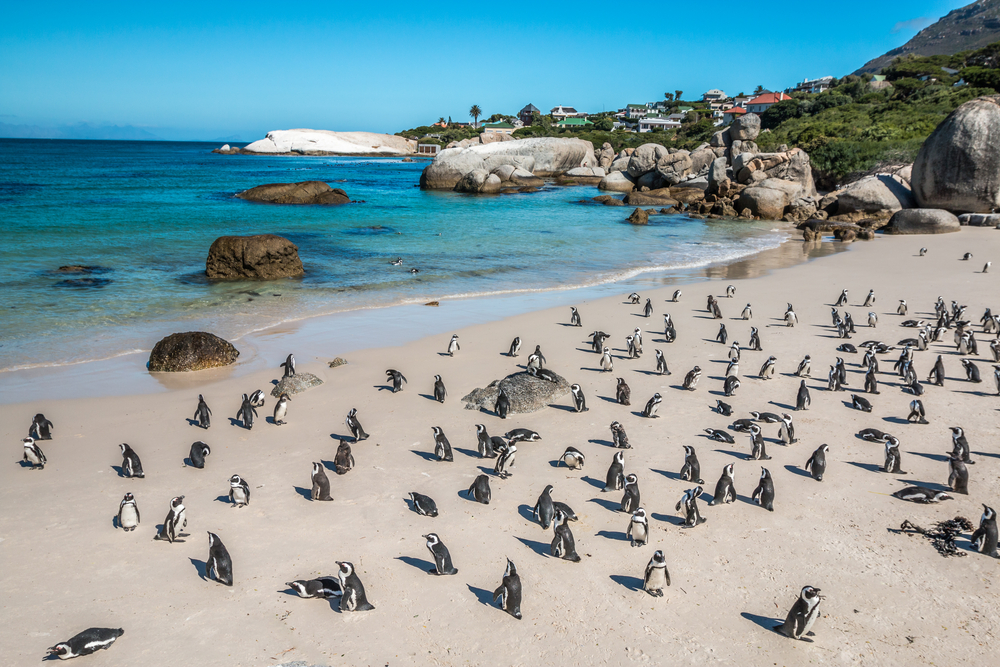 boulders-penguin-colony