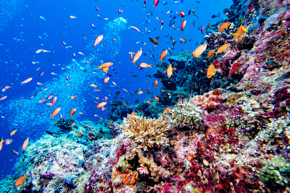 Maldives coral reef diving