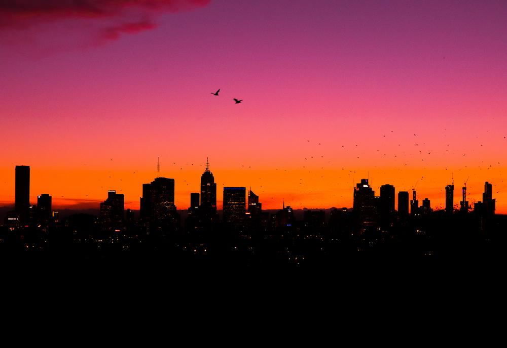 melbourne-bat-flying-sunset