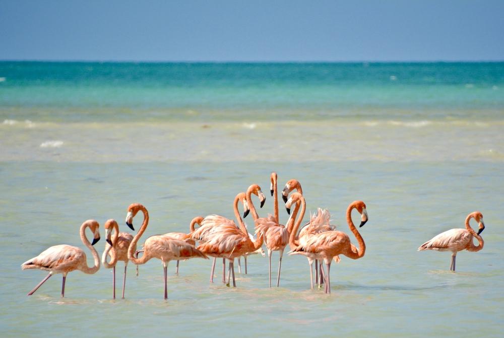 cancun_isla_holbox_mexico_island