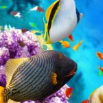 maldives_diving