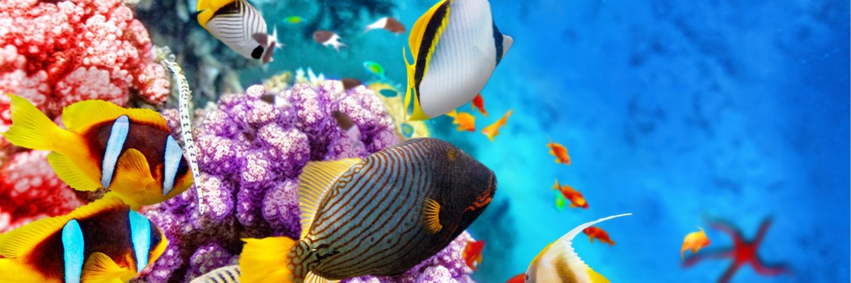 maldives_diving