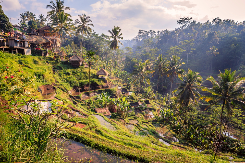 bali_ubud_jungle_mountains