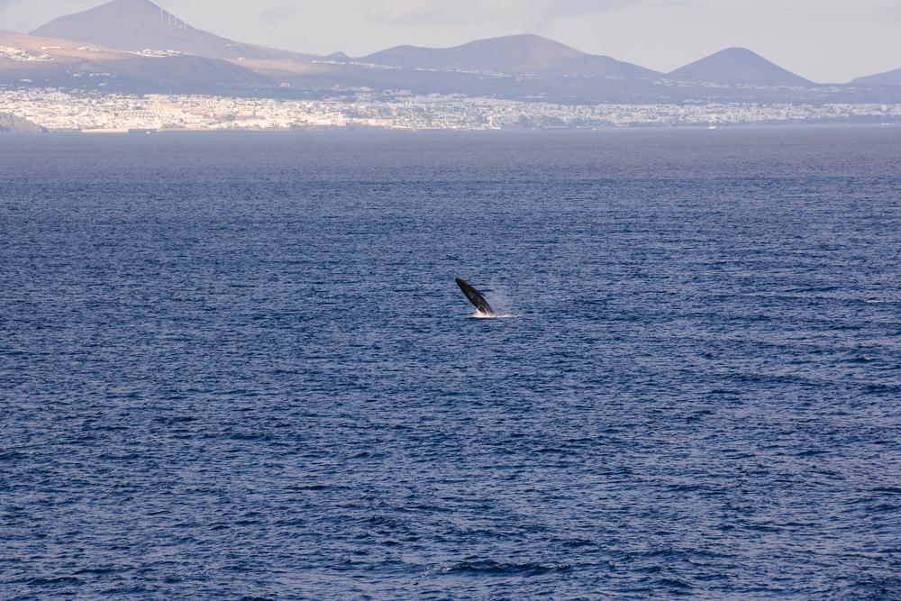 Fuerteventura_whale_dolphin_watching