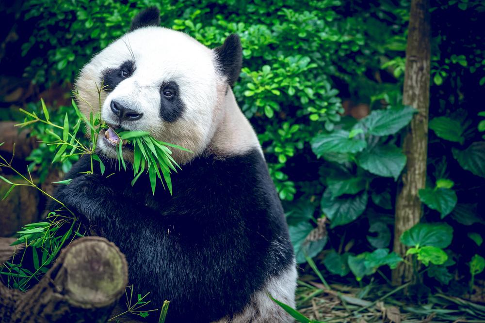 Singapore_Stopover_Holiday_Zoo