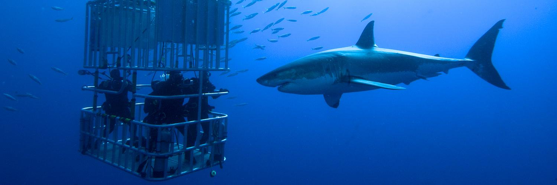 sharkcagecapetown_161038754