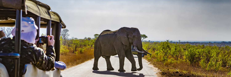 elephant at safari park