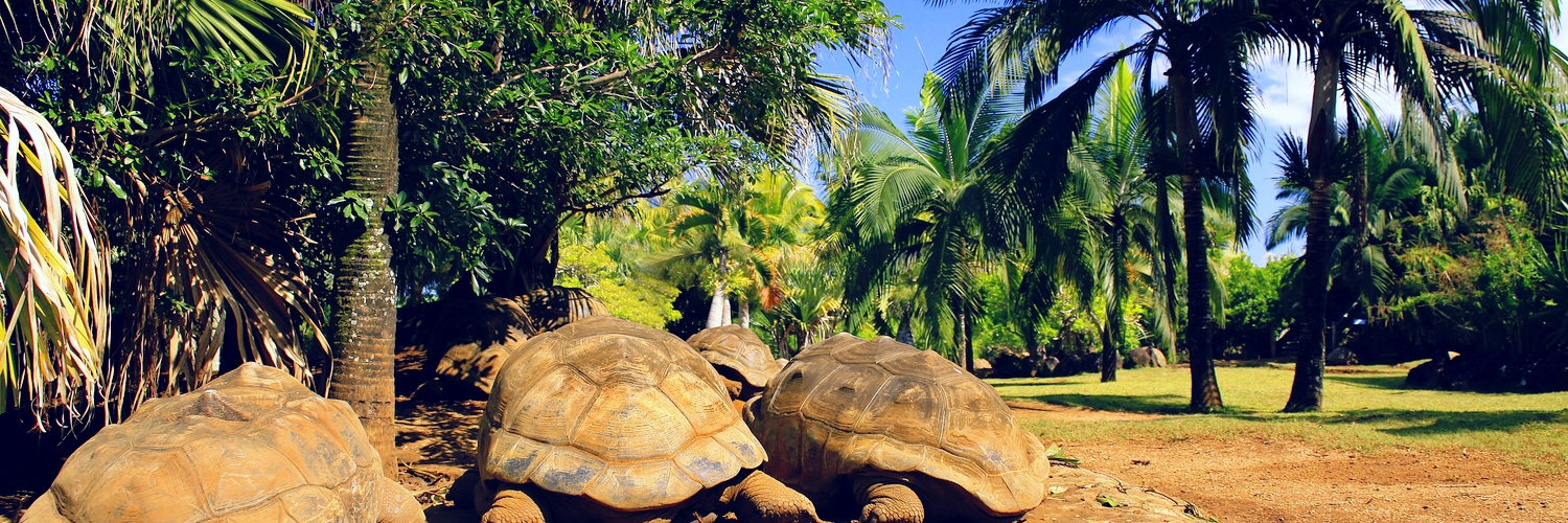 mauritus_animal_experiences