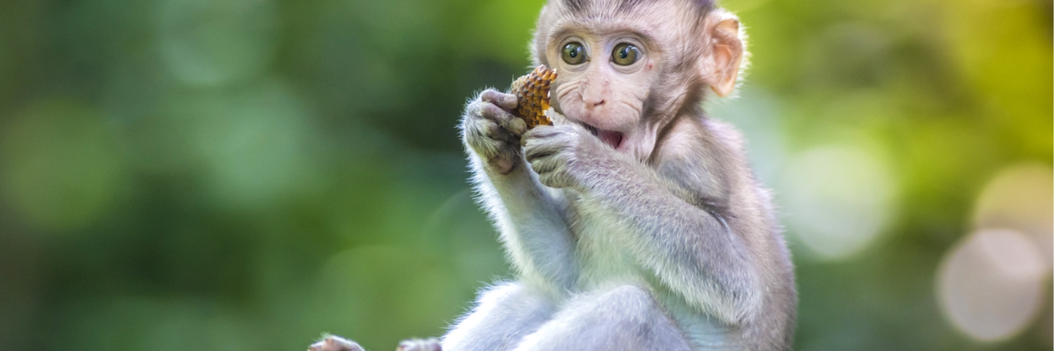 bali_ethical_animal_experiences